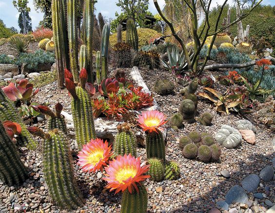 Plantes jardin californien